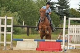 koně_10