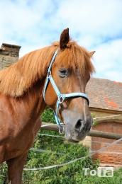 koně_2