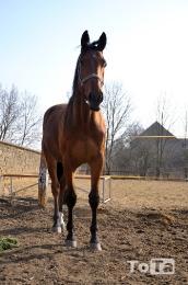 koně_3