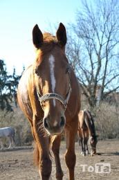koně_4