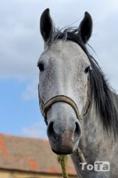 koně_5